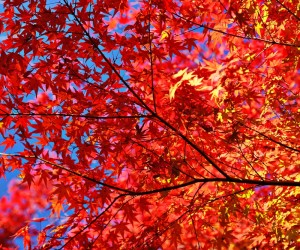 Fall Is A Great Time To Prepare Your Home And Yard For Next Year/Gerber Moving & Storage, Inc.